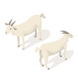 Isometric 3d of white goat vector image vector image