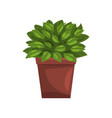 philodendron indoor house plant in brown pot vector image vector image