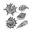 set of abstract shells vector image