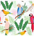 colorful cartoon exotic parrots and tropical vector image vector image
