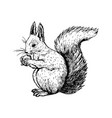 hand drawn squirrel sketch vector image vector image