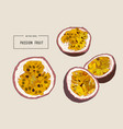 passion fruit vector image vector image