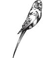 Canary Bird vector image