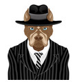dog breed pit bull terrier in suit vector image