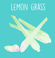fresh lemon grass plant and slice vector image vector image