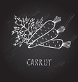 hand drawn carrots vector image