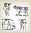 Hand drawn cow set