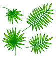 palm leaf set on white background vector image vector image
