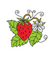 strawberry fruit design template vector image vector image