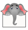 elephant character - holding blank board vector image