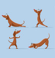 funny wiener dog doing yoga cartoon vector image vector image