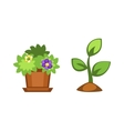 Home flowers in pot vector image vector image