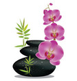 pebbles with orchid vector image vector image