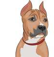 Staffordshire Terrier a vector image vector image
