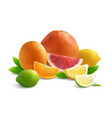 citrus realistic composition vector image