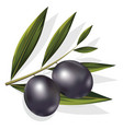 realistic of black and olives branch vector image vector image
