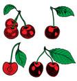set hand drawn cherry design elements vector image