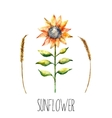 Watercolor sunflower and spica vector image vector image