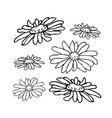 chamomile camomile flower floral hand drawn vector image