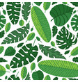 Tropical leaves pattern summer equatorial