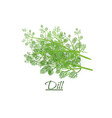 fresh twigs of fresh tasty dill in a realistic vector image vector image