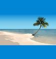 sandy beach with palm and sea horizon vector image