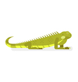 flat style of iguana vector image