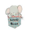 little pocket elephant vector image