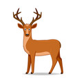 american deer animal standing on a white vector image vector image
