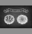 chalk sketch sea urchins vector image vector image