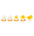 chicken hatching stages newborn little cute chick vector image vector image