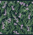 floral seamless pattern with blooming rosemary on vector image vector image