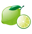 green lemon with slice vector image