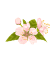 Cherry Blossom with Leaves Isolated on White vector image vector image