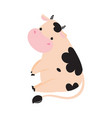 cute sitting baby cow adorable funny farm animal
