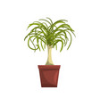 dracaena indoor house plant in brown pot element vector image vector image