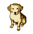 Fun and cute little dog golden retriever vector image
