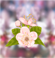 cherry blossom blur nature background vector image vector image