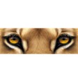 big eyes yellow eyes a lion close up vector image vector image