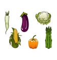 Fresh healthy isolated farm vegetables vector image vector image