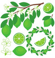 Lime Set vector image vector image