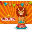 lion circus animal show isolated icon vector image