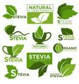 stevia sweetener sugar substitute healthy vector image vector image