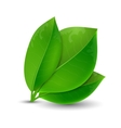 ecology concept green leaves vector image vector image