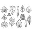 sketch autumn leaves hand drawn fall foliage vector image