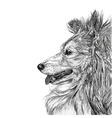 Sketch of Siberian dog vector image vector image