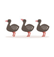 three cute nestlings of ostrich standing one after vector image vector image