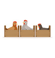 chicken sitting in wooden perches breeding vector image