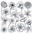 collection of hand drawn spring flowers and plants vector image vector image