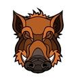 head boar mascot color design vector image vector image